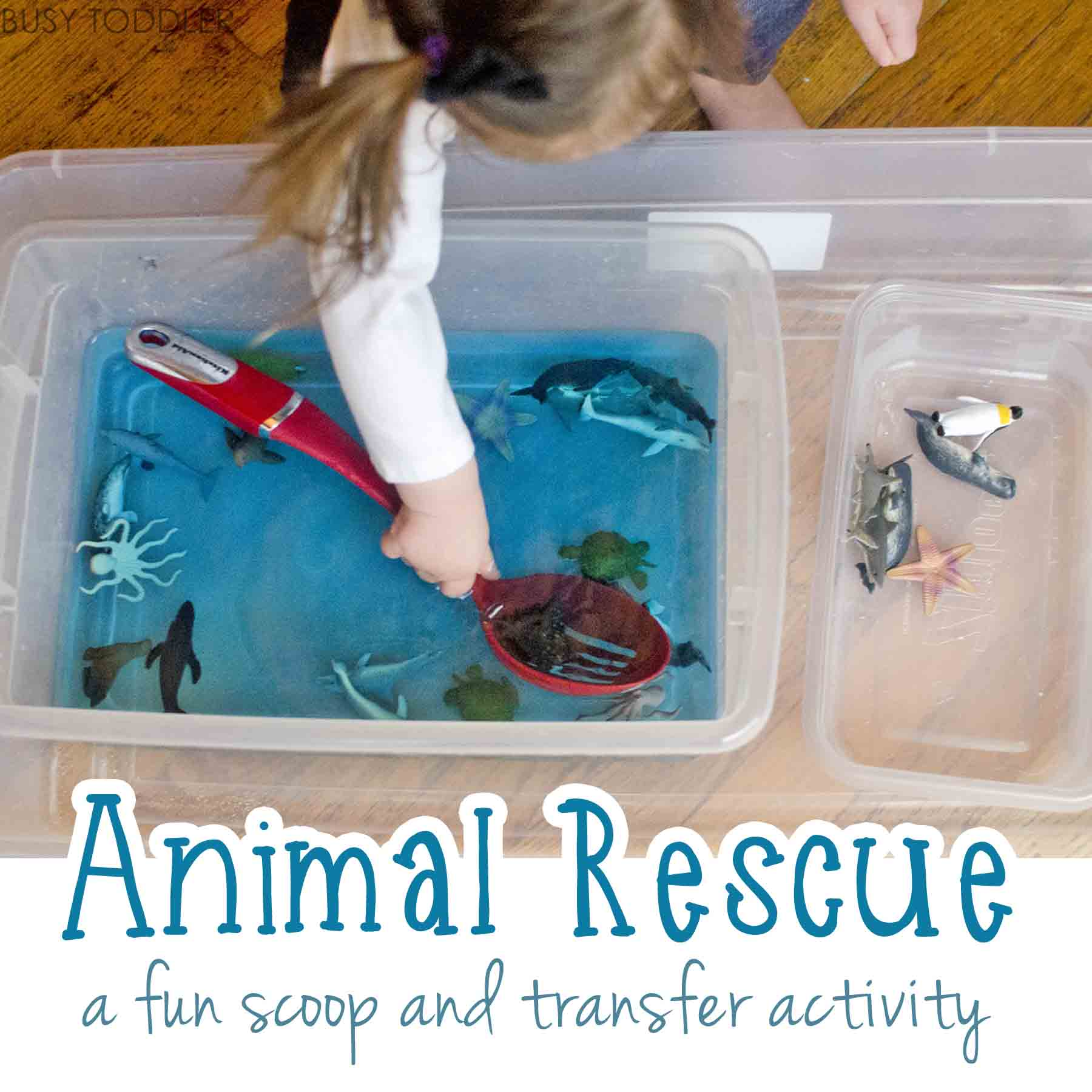 ANIMAL RESCUE: A fun scoop and transfer activity; easy indoor activity; water play activity; life skill activity
